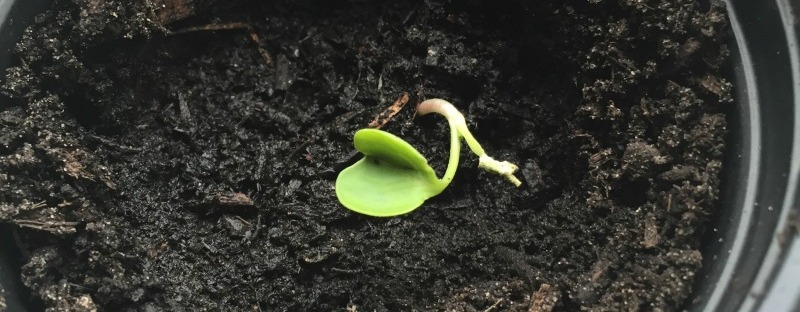 Onbekend plantje